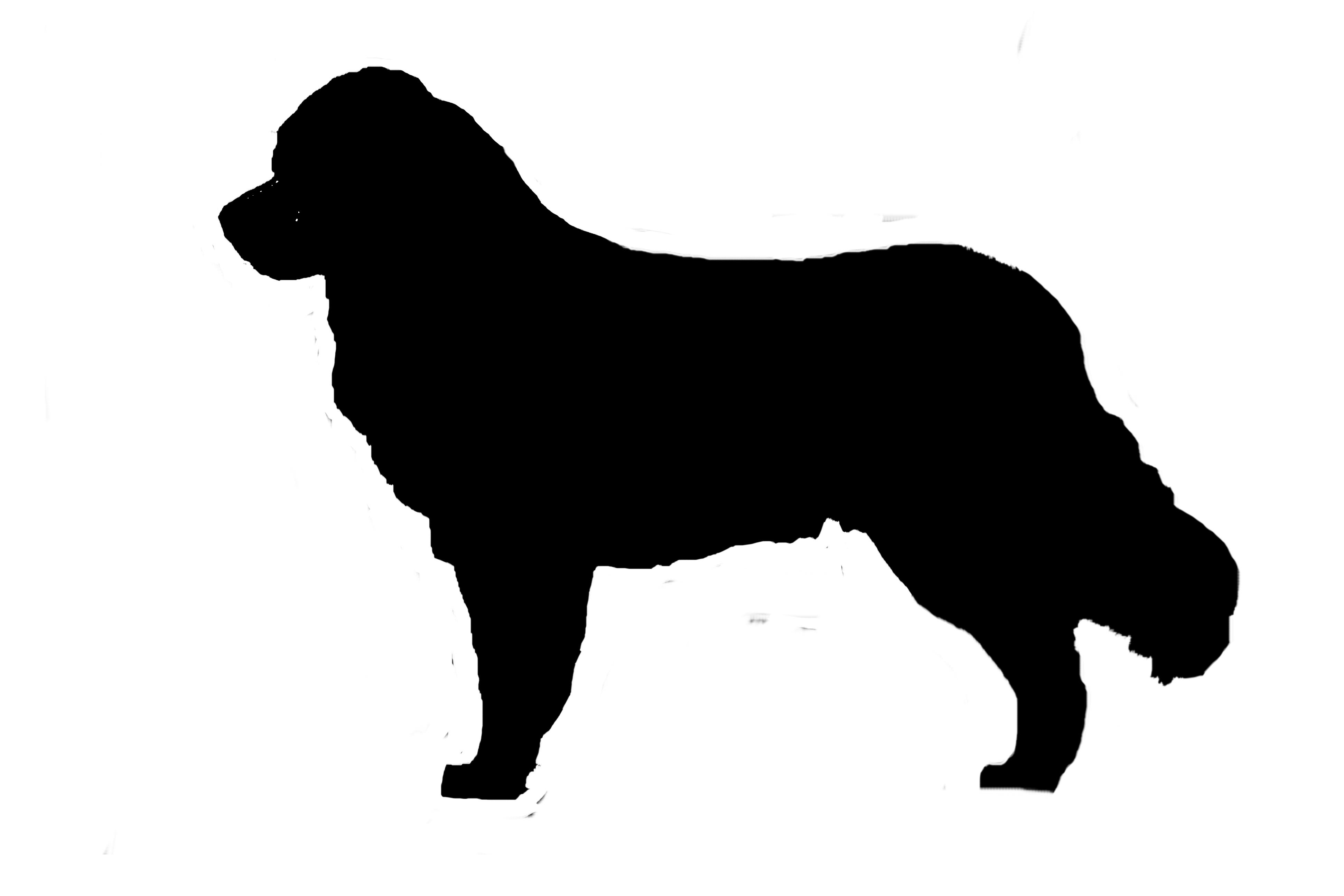bernese mountain dog silhouette vinyl sticker decal